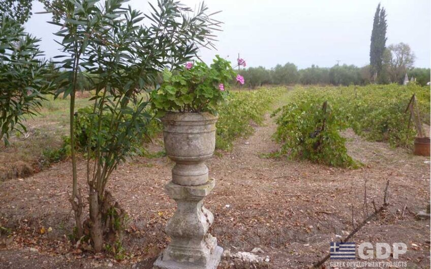 35 hectares plot of land on sale in Zakynthos Island